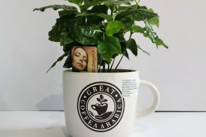 coffe-arb